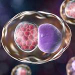 Chlamydie – možná příčina chronických infekcí