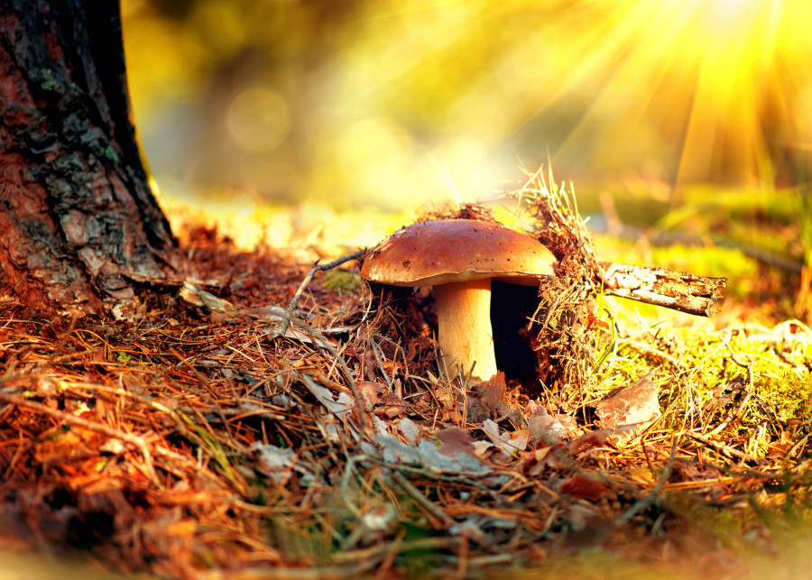 Pozor na otravu houbami