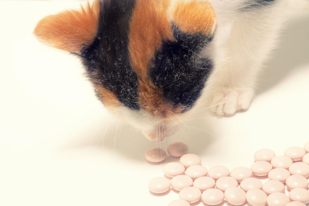 kočka-a-léky.jpg